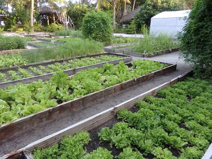 Gili Lankanfushi(オーガニック・ガーデン)