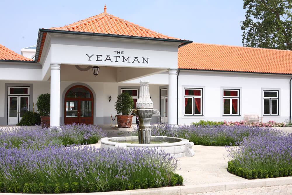 THE Yeatman イメージ1