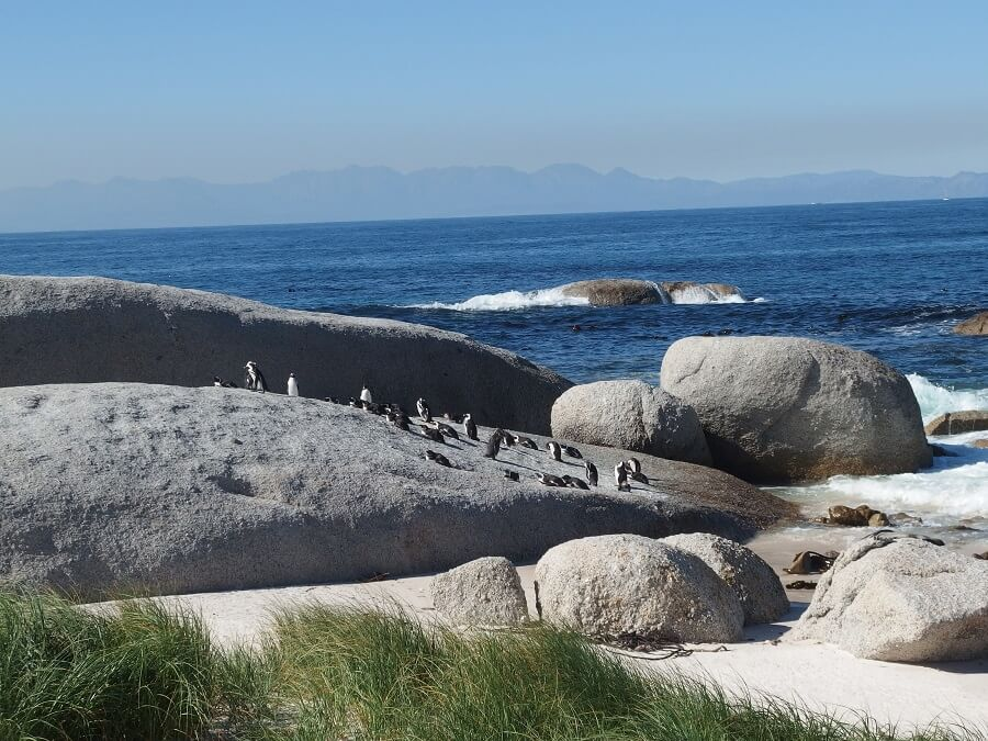 ボルダーズ・ビーチ(ペンギン居住地)