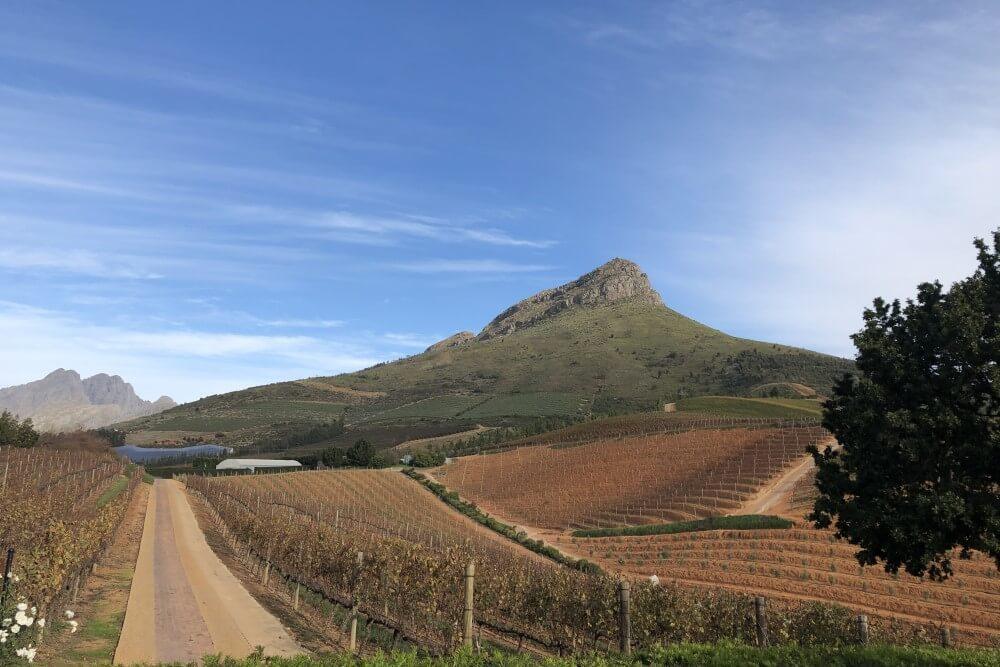ディレア グラフ ロッジ&スパ ワイン畑