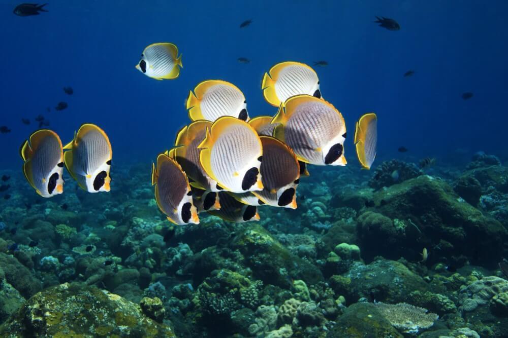 セントレジスバリ 海