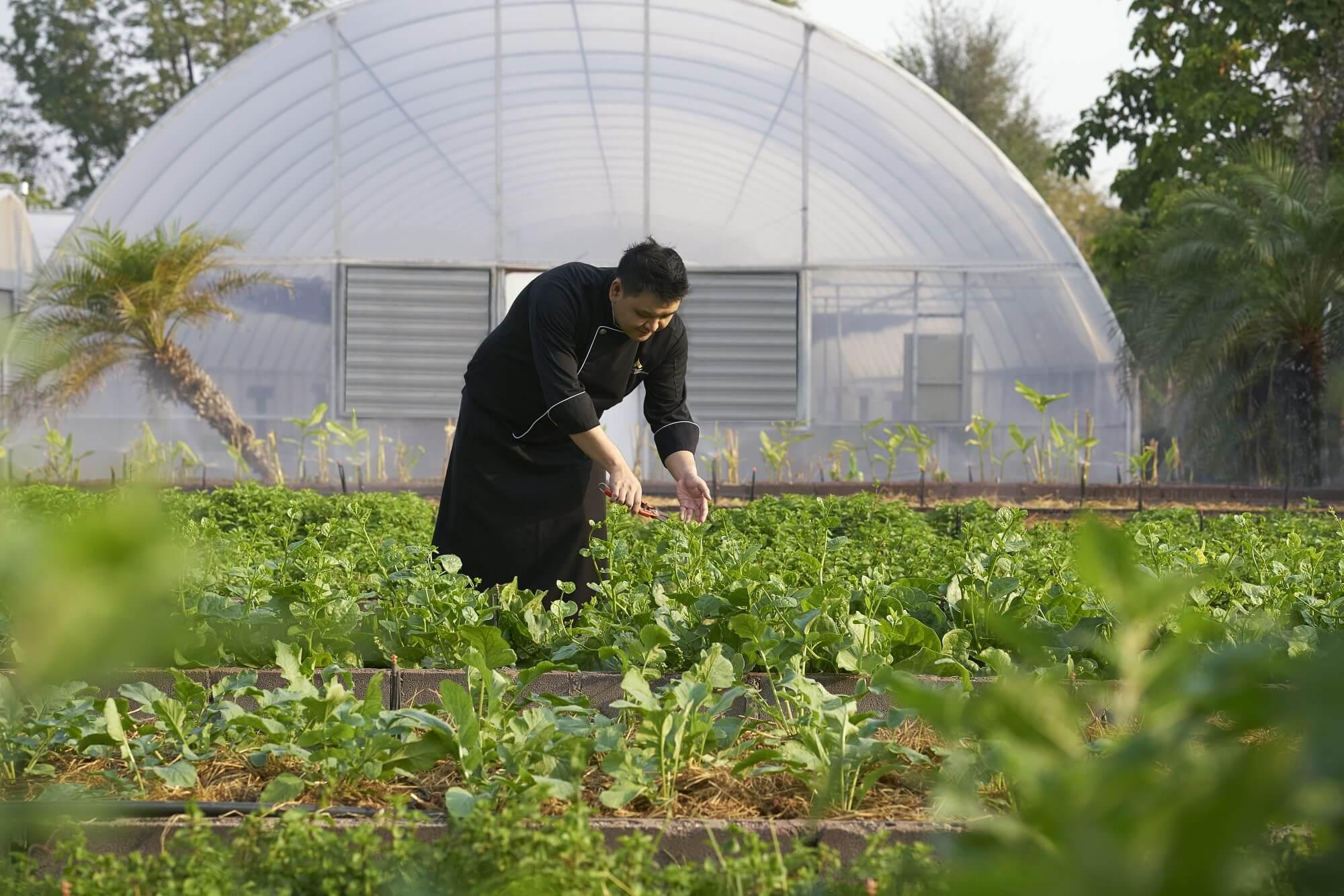 チバソム organic_garden_with_chef_paisarn