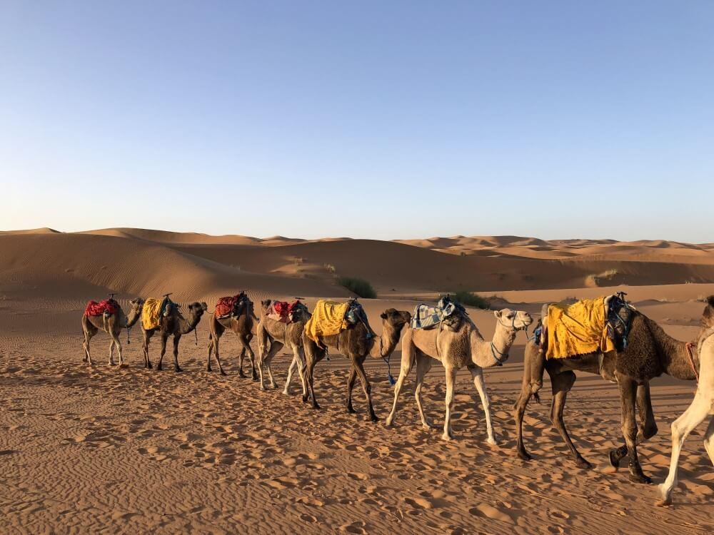 サハラ砂漠 ラクダ乗り体験