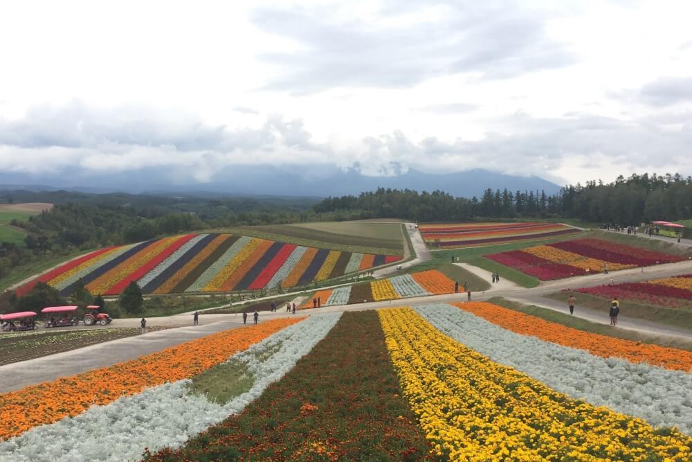 北海道 フラワーロード 四季彩の丘