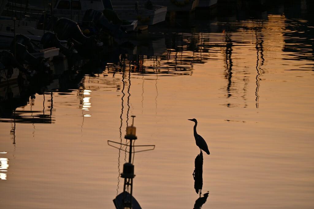 小値賀島 朝の景色