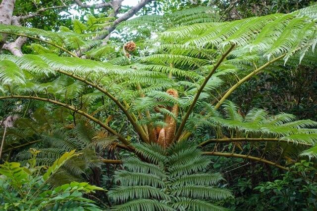 西表島 マングローブ原生林