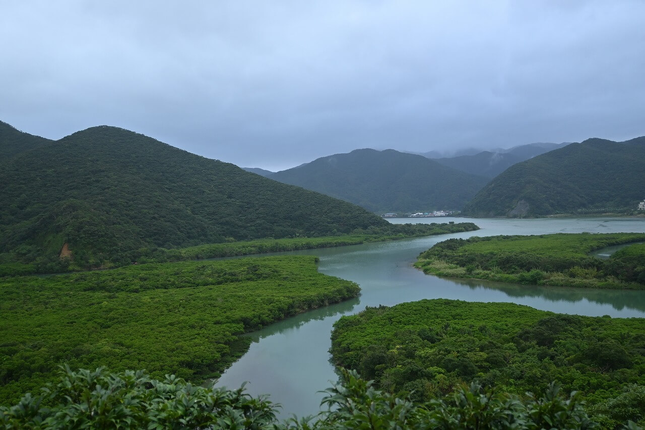 奄美大島 マングローブ原生林