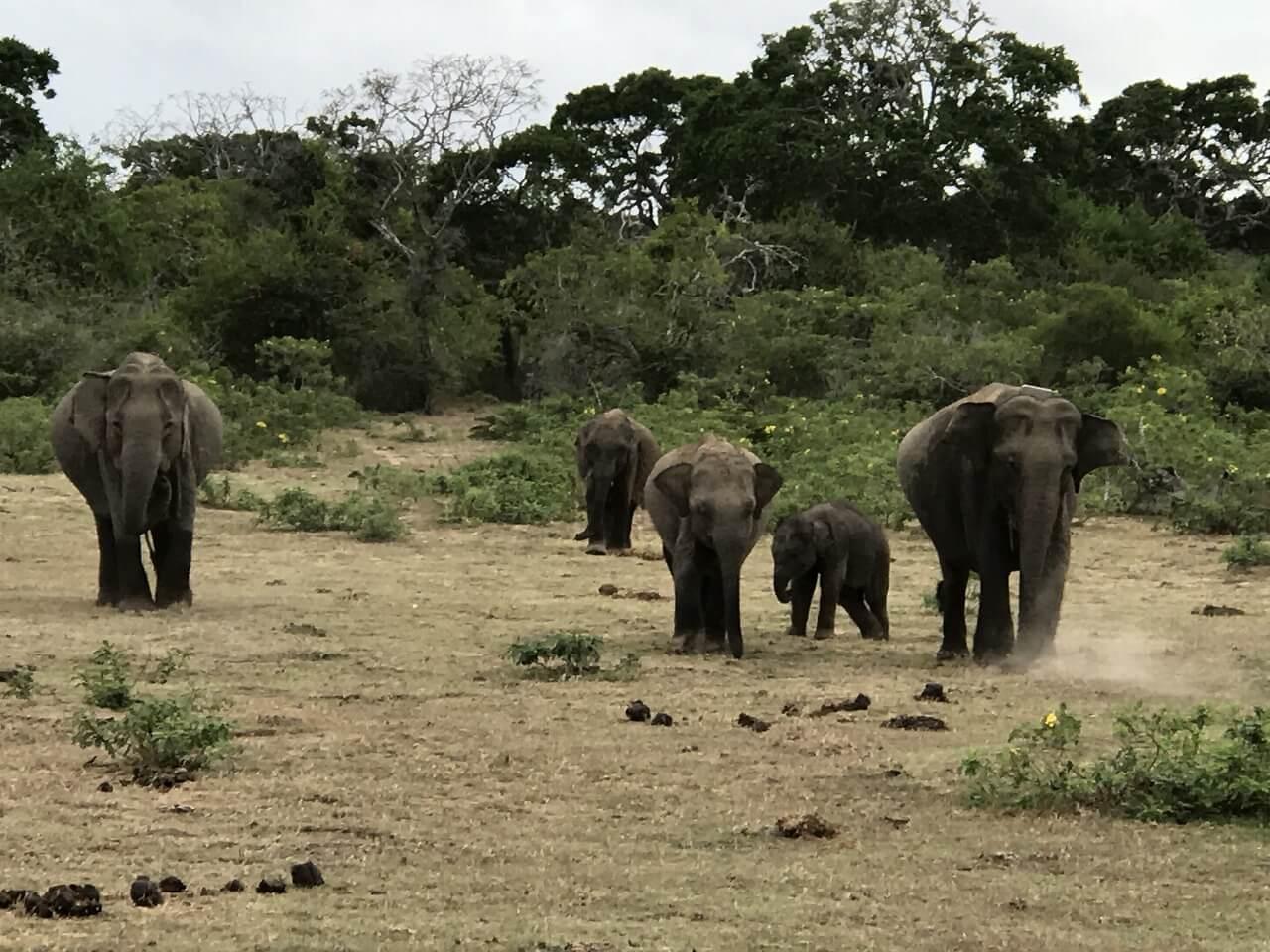 スリランカのサファリ 1大自然1