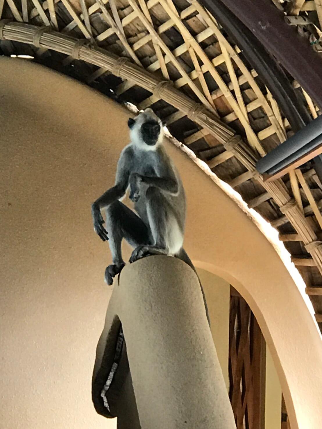 スリランカのサファリ 8室内に猿