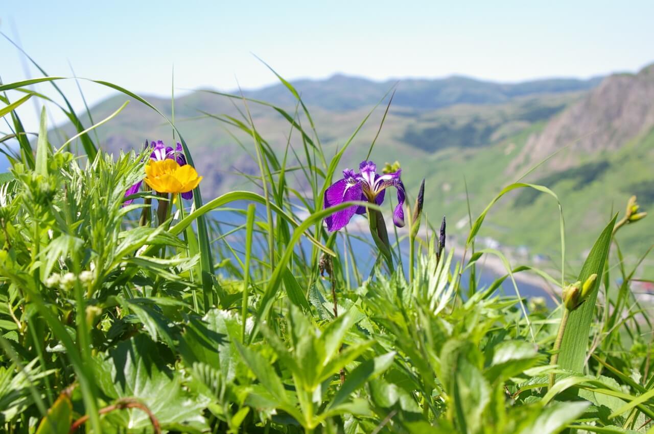 北海道の自然を満喫! 利尻富士と花の島・礼文 4日間
