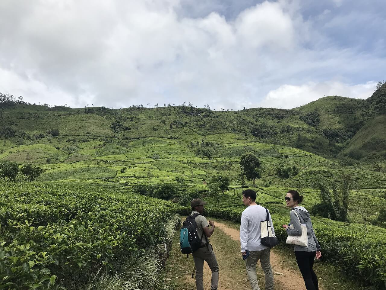 「セイロン紅茶」の国・スリランカ 9茶畑トレッキング