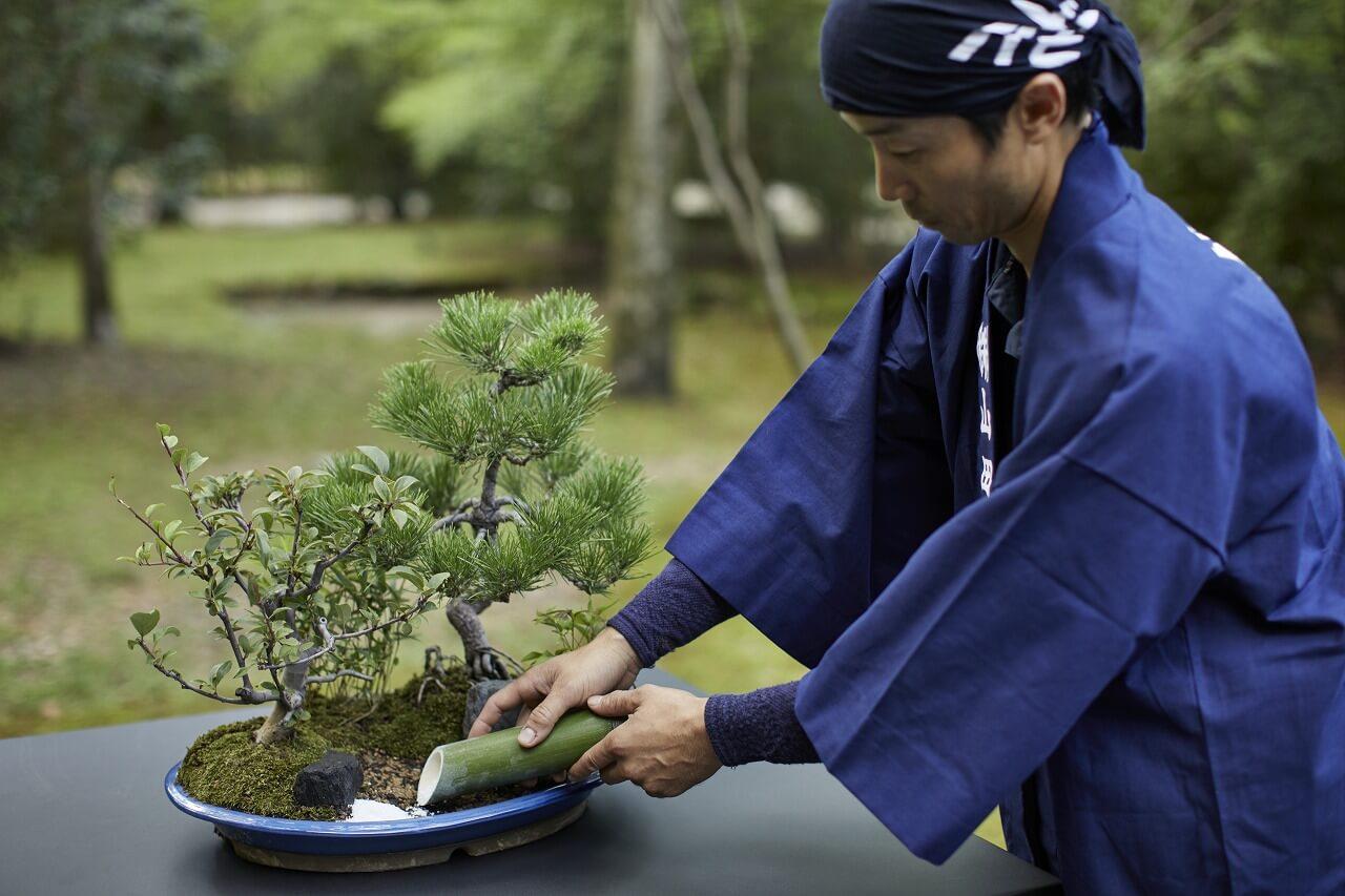 アマン京都 盆景
